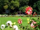 Blumenpracht im Zoo